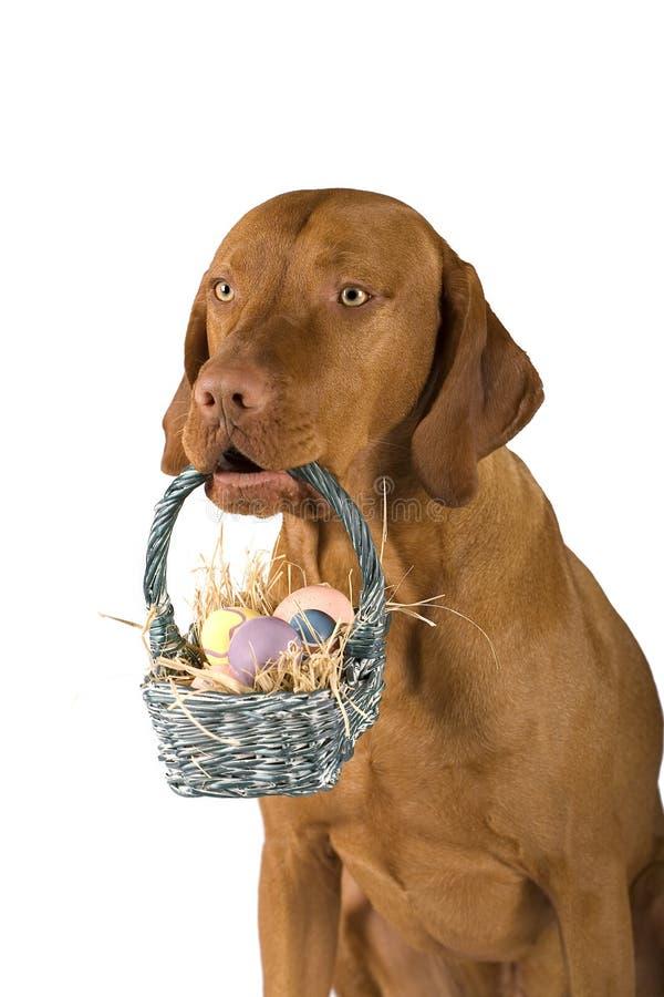 Dog holding basket of eggs royalty free stock photos