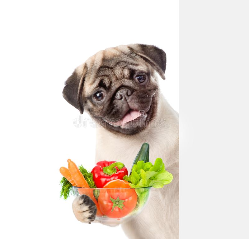 Dog holding bowl of vegetables and peeking from behind empty board. isolated on white background royalty free stock photo