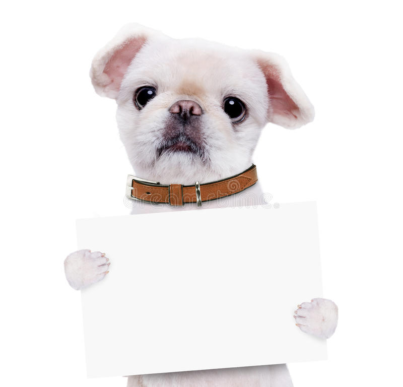 Dog holding in his paws white banner. royalty free stock photos