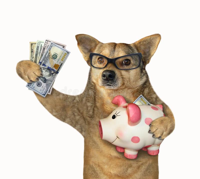Dog holding a piggy bank royalty free stock photos