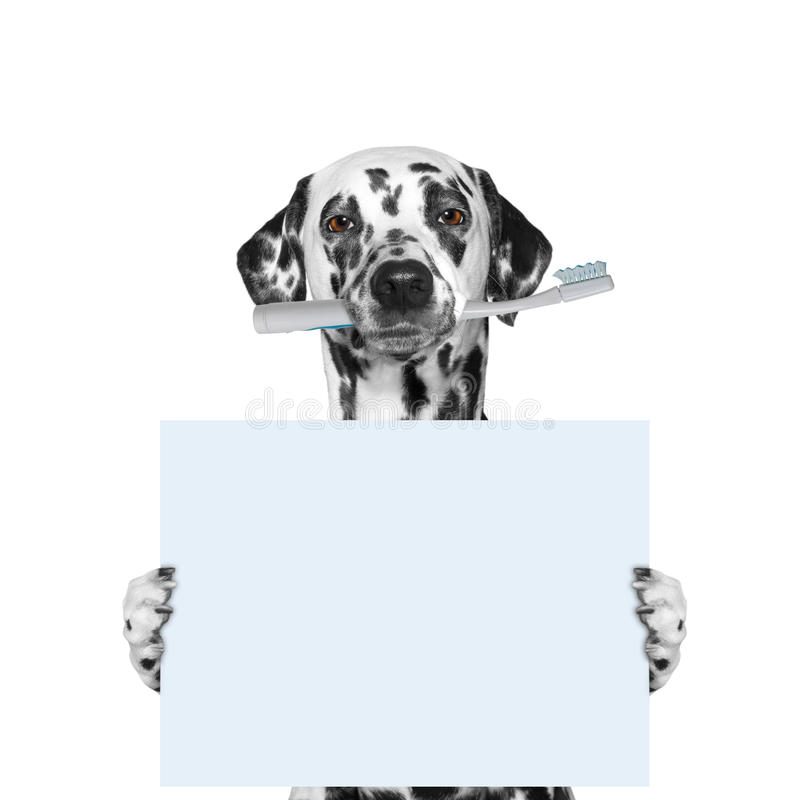 Dog holding a toothbrush and blank stock photography