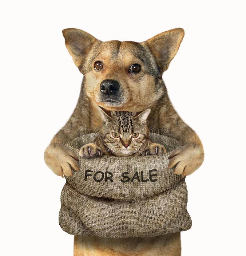 Dog holds a sack with a cat 2. The mongrel dog holds a big bag with a kitten for sale. Isolated stock photo