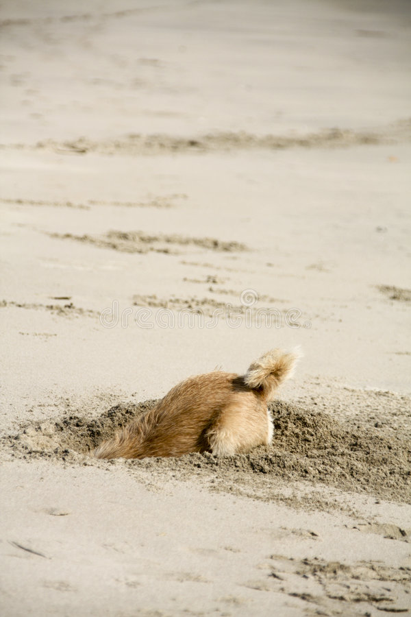 Dog in a hole stock images