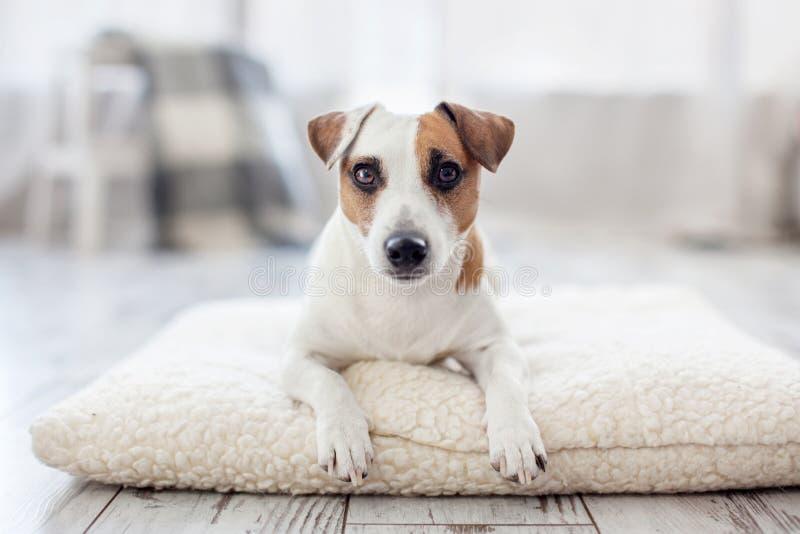 Dog at home. Pet indoors stock photos