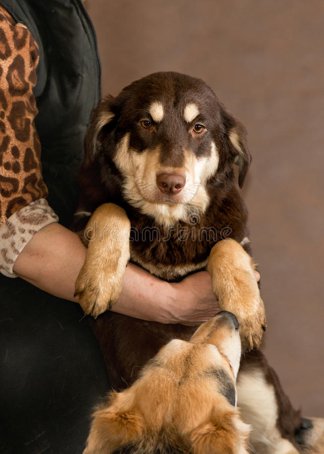 Dog from a homeless animals shelter royalty free stock photos