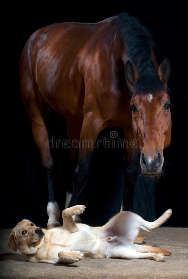 Dog and horse royalty free stock photography