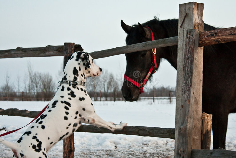 Dog and horse royalty free stock photo
