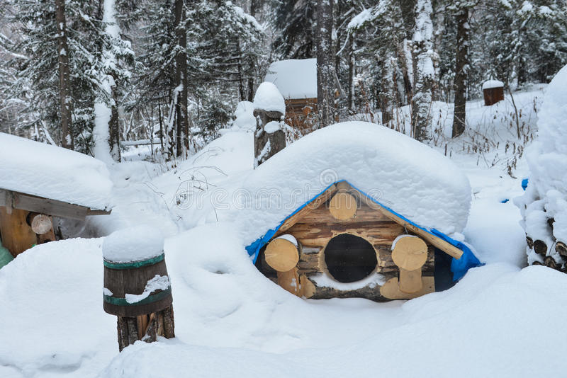 Dog house in the winter with snow on roof. Dog house in the winter with snow on roof stock image