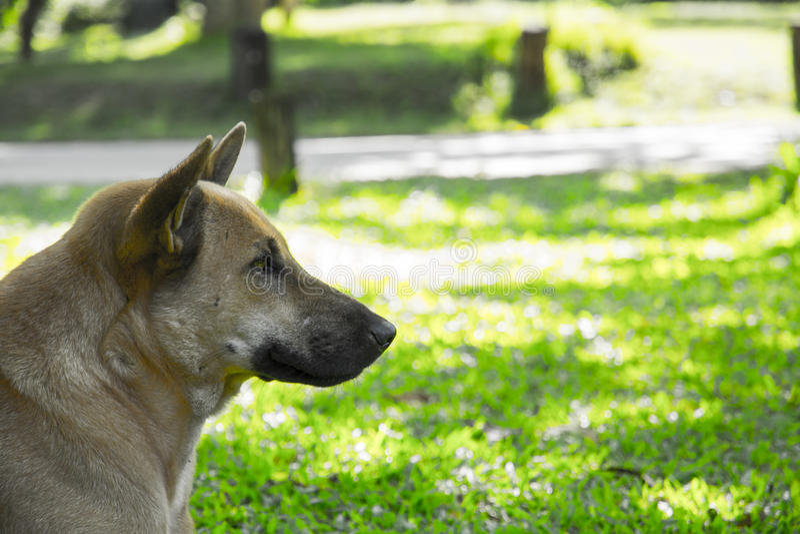 Dog in huay mae khamin waterfall national park stock photo