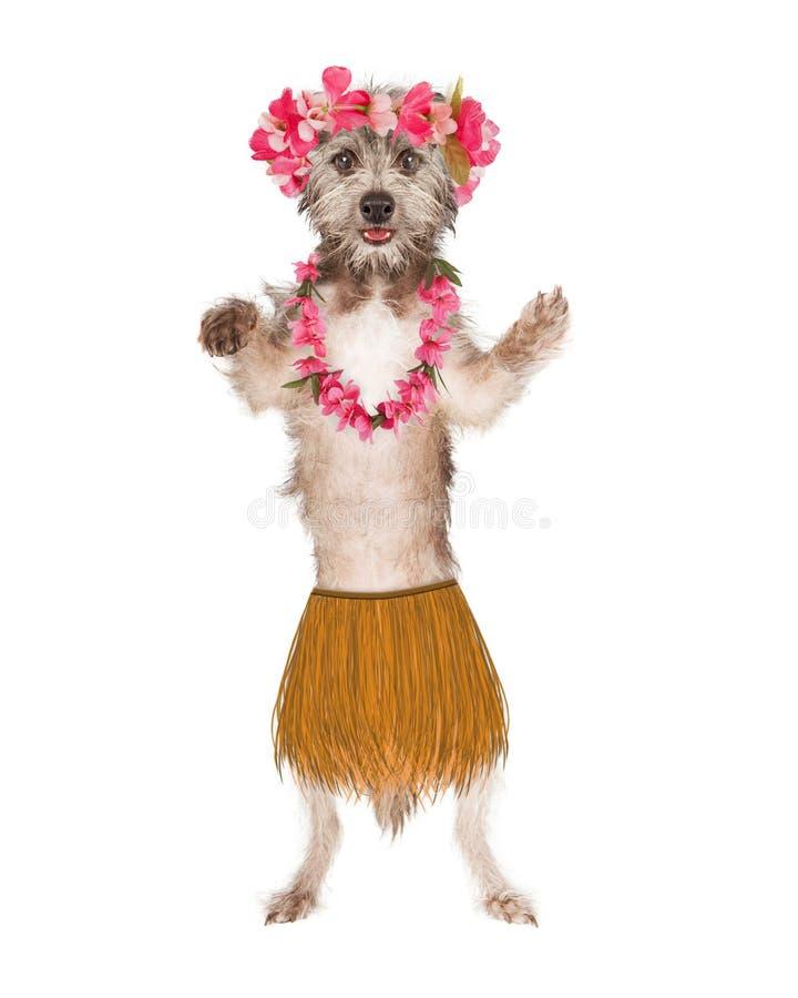 Dog Hula Dancer. Cute dog dressed as a Hawaiian hula belly dancer vector illustration