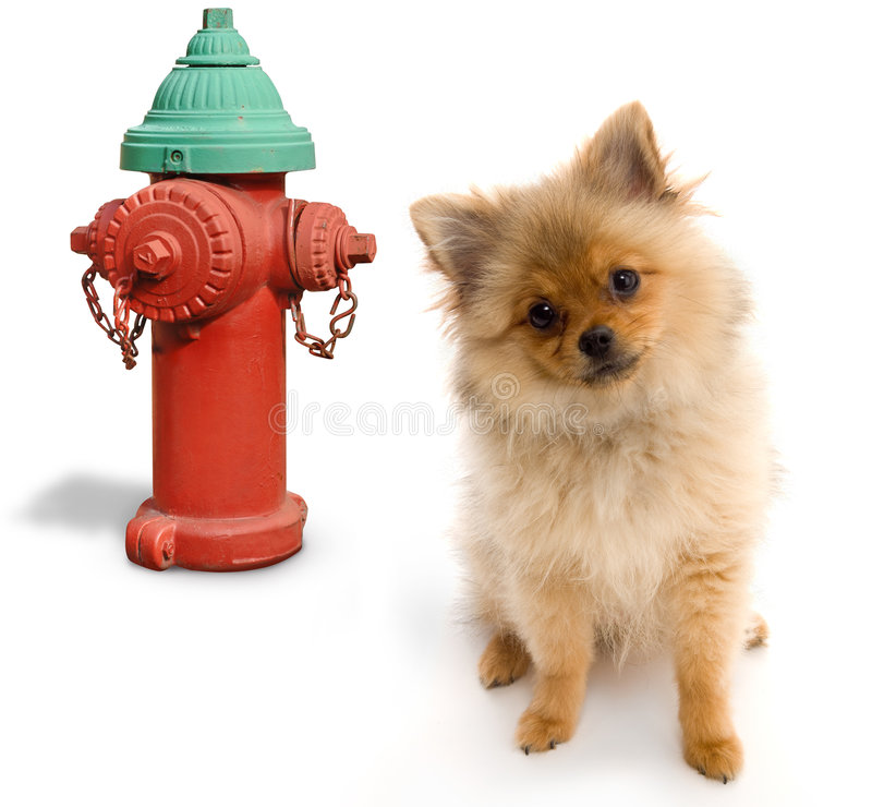 Dog and Hydrant royalty free stock photos