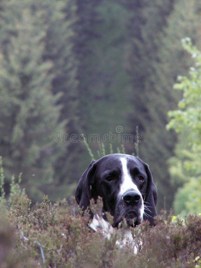 Free Dog In Forest Royalty Free Stock Photos - 2181558