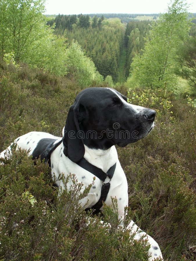 Free Dog In Forest Royalty Free Stock Images - 2182989