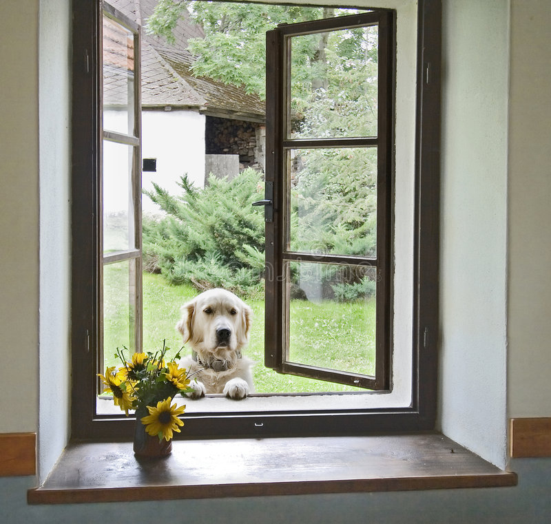 Free Dog In Window Royalty Free Stock Image - 6039746