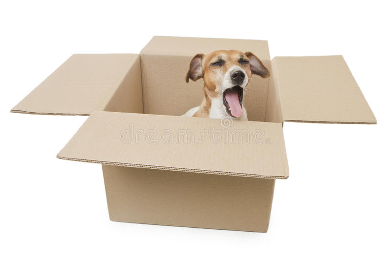 Dog inside the box package delivery royalty free stock photos