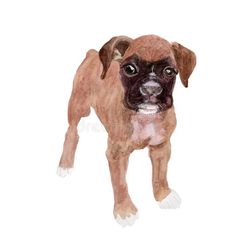 Dog isolated on white background .Boxer Dog Hand painted Watercolor illustration. stock illustration