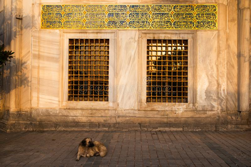 The dog of Istanbul stock photos