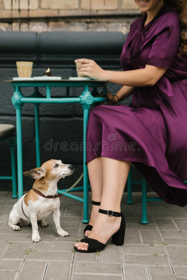 Dog and woman in street cafe. having lunch out. Elegant style purple stylish silk dress royalty free stock photography