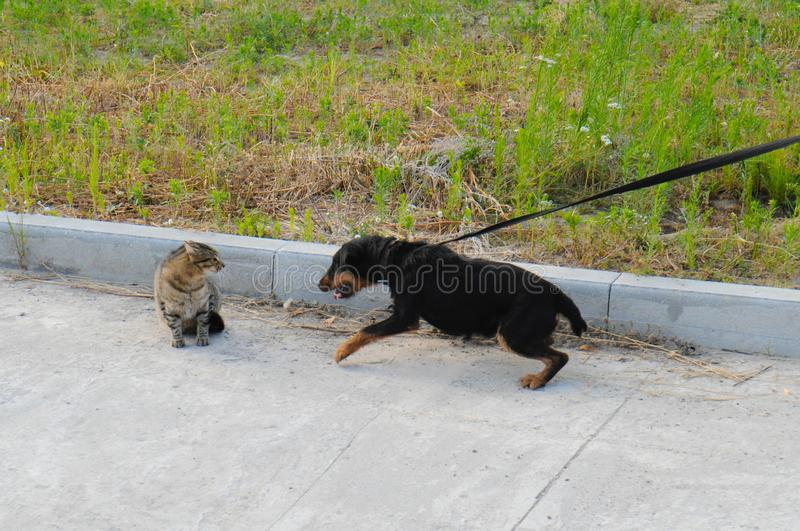 Dog jagdterrier and cat on the street in the territory of the animal shelter royalty free stock photography