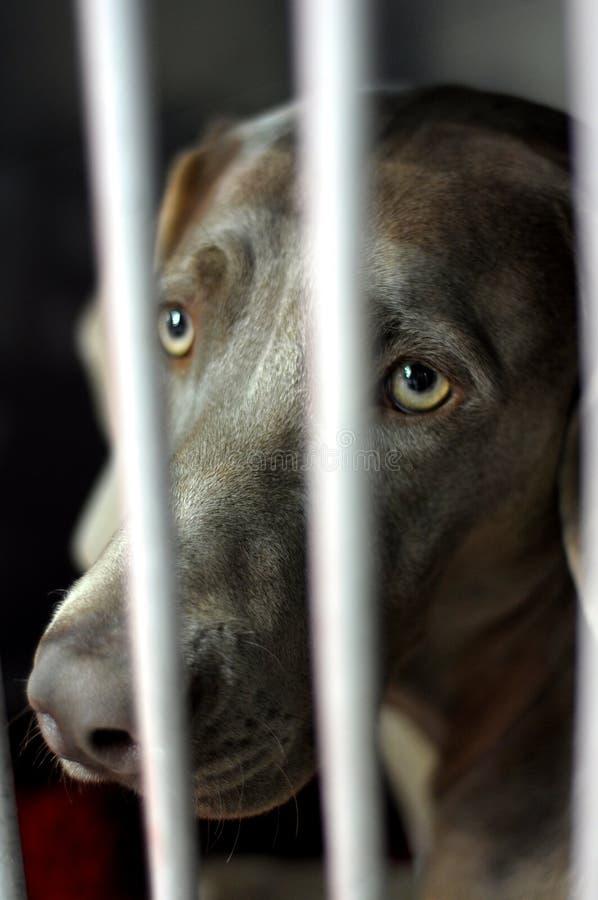 Dog in jail royalty free stock image