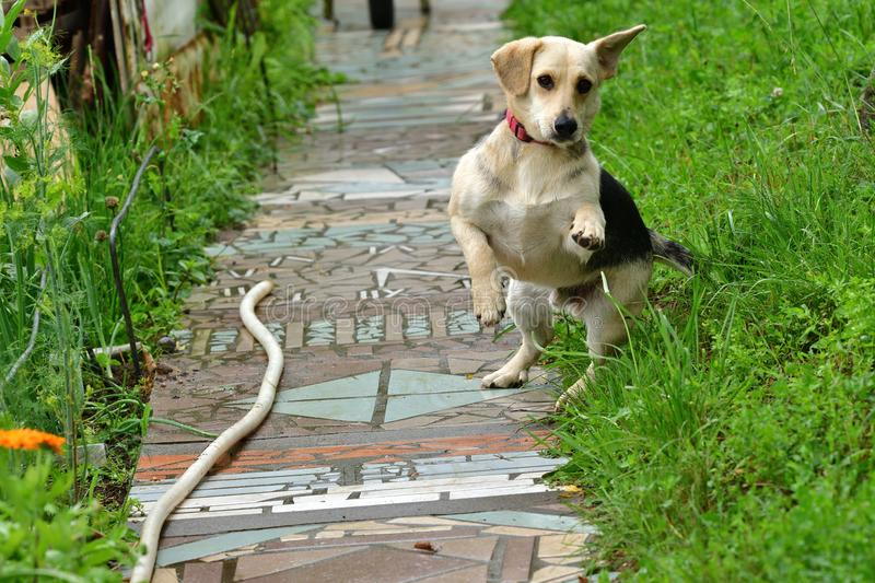 Dog jumping on the grass on commands royalty free stock photo