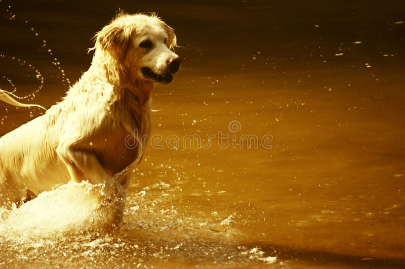 Dog jumping in water