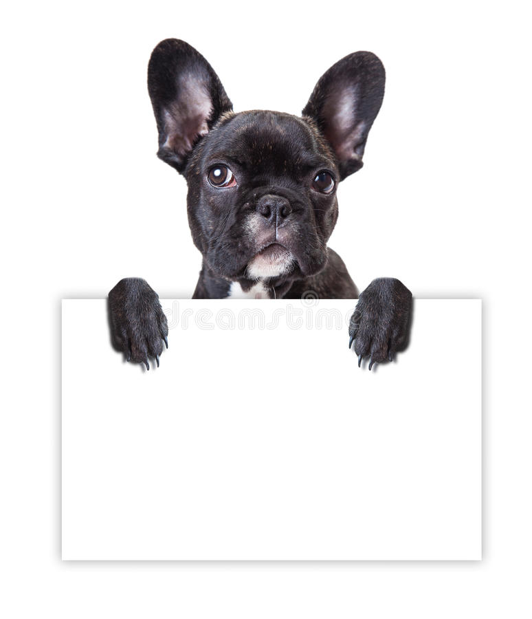 Free Dog Keeps A Sheet Of Paper Stock Photography - 47007302