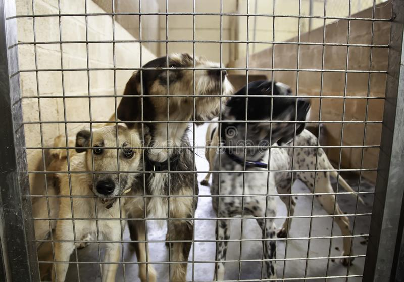 Dog in kennel royalty free stock photography
