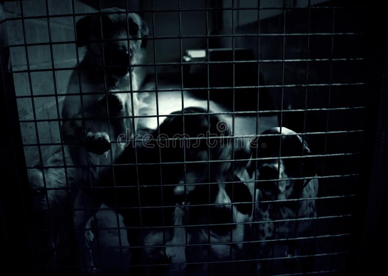 Dog in kennel stock photography