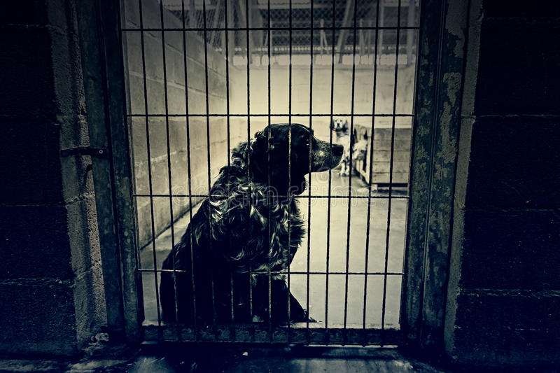 Dog kennel quiet royalty free stock image