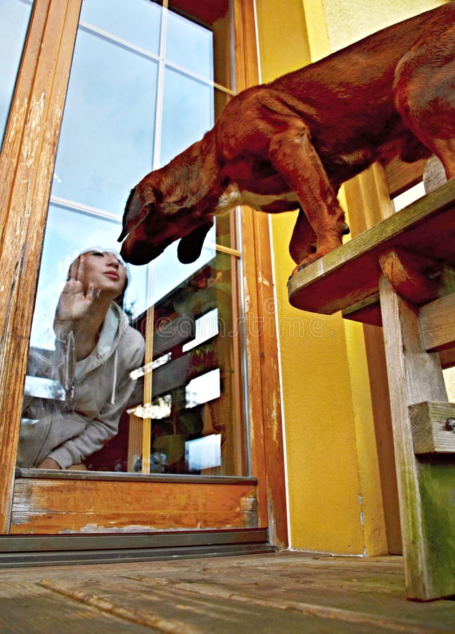 Dog kissing the girl through the window glass. Dog kissing the girl inside through the window glass, october 2016