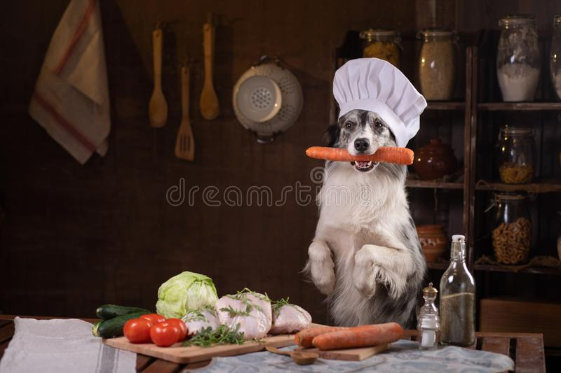 Dog in the kitchen with vegetables. Nutrition for animals, natural food. Border Collie in a Cooking Hat royalty free stock photography