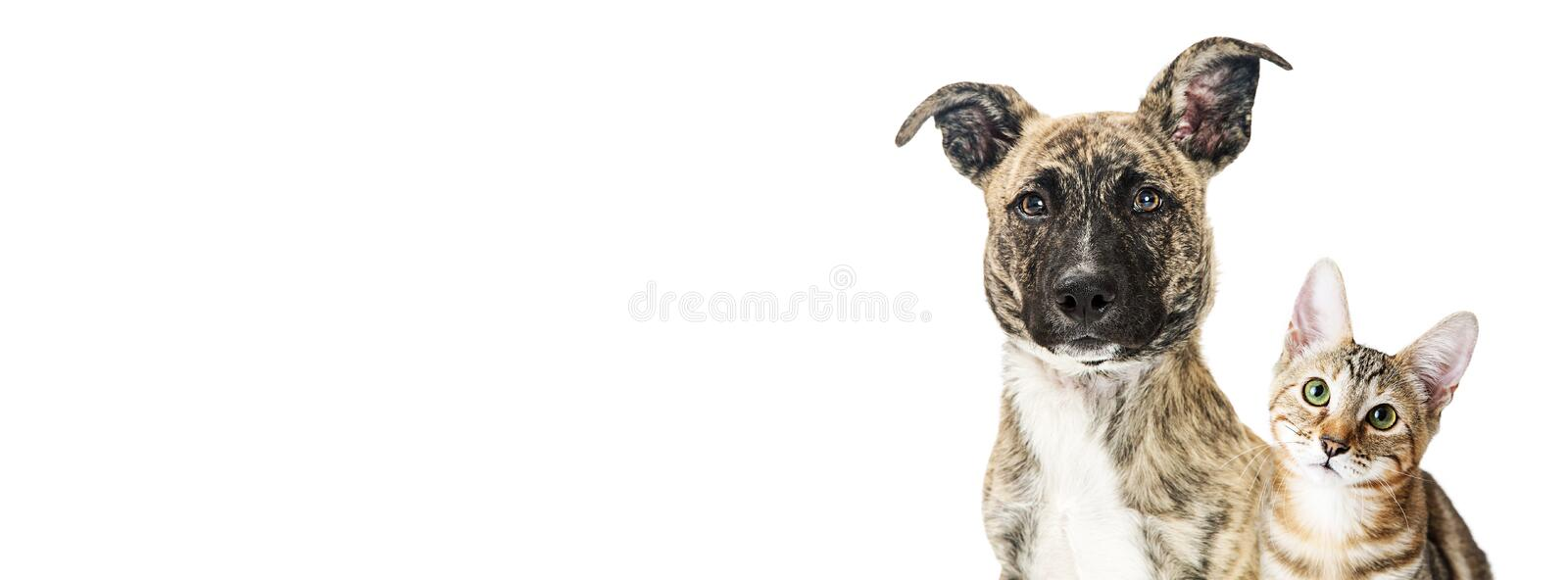 Dog and kitten closeup white banner stock photography