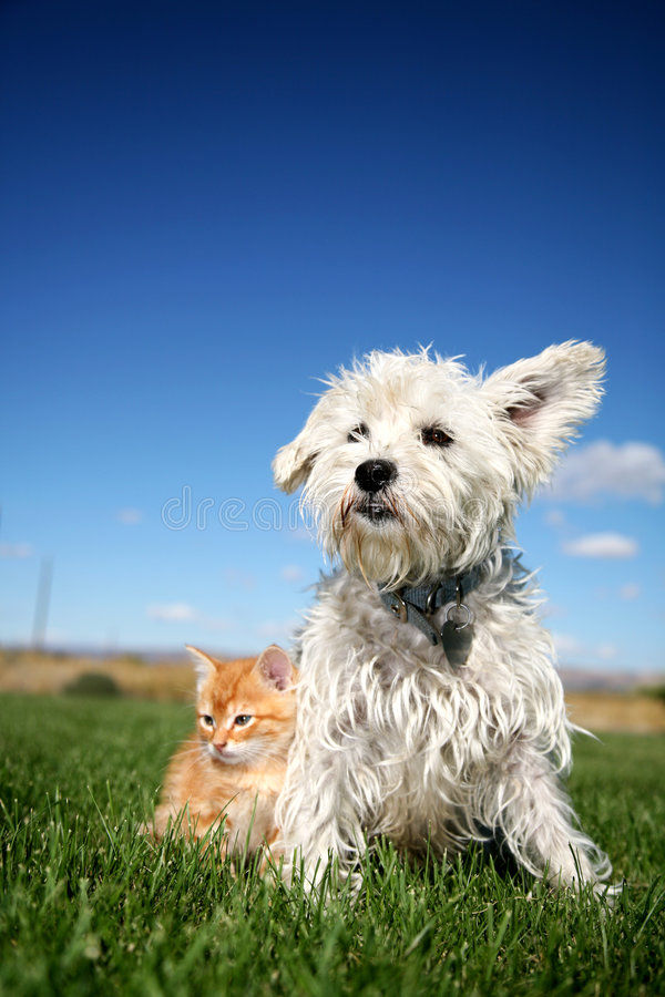 Dog and Kitten on lawn. A little terrier sitting right next to kitten
