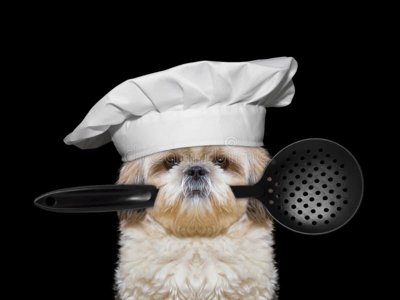 Dog kocken som rymmer en sked i hans mun royaltyfria bilder