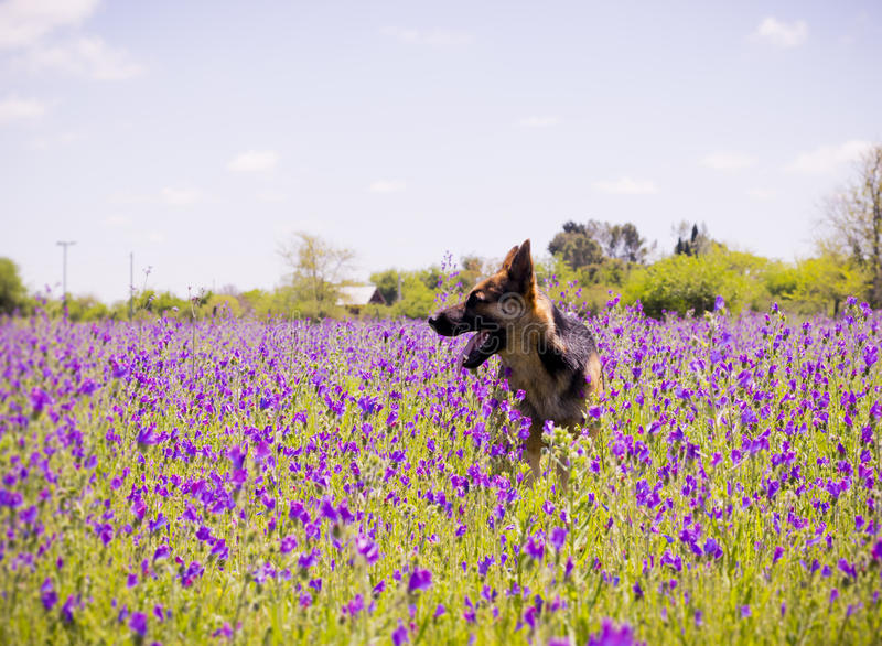 Dog in landscape of field with sunlight stock photos