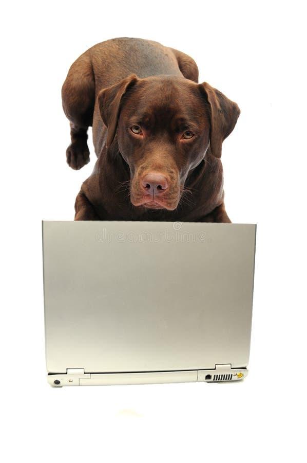 Dog And Laptop Royalty Free Stock Photos
