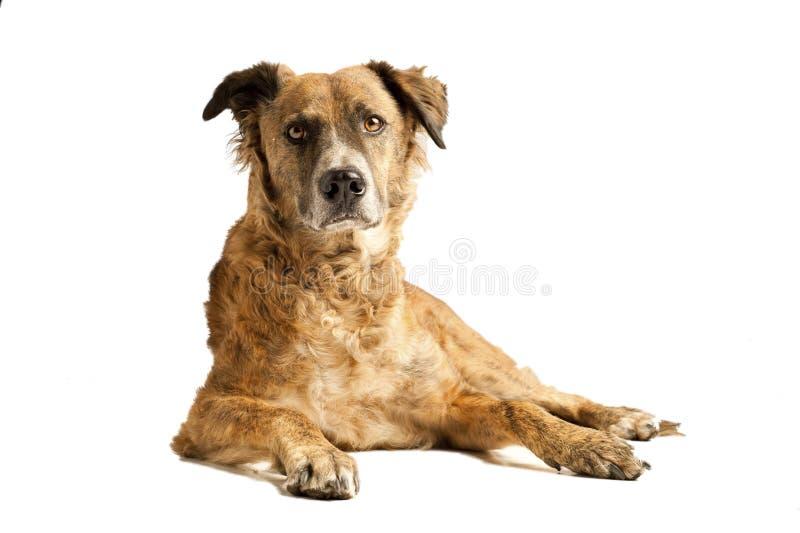 Dog laying down stock photos