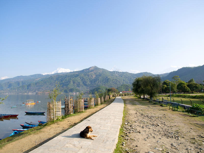 Dog laying down for sunbathing on the path around the lake. That has few colorful boats with the mountain and the blue sky as background, Phewa Lake, Pokhara stock photo