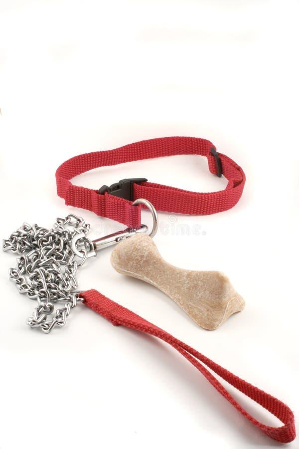 Dog leash and bone royalty free stock photos