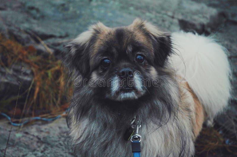 Dog on leash outdoors stock photos