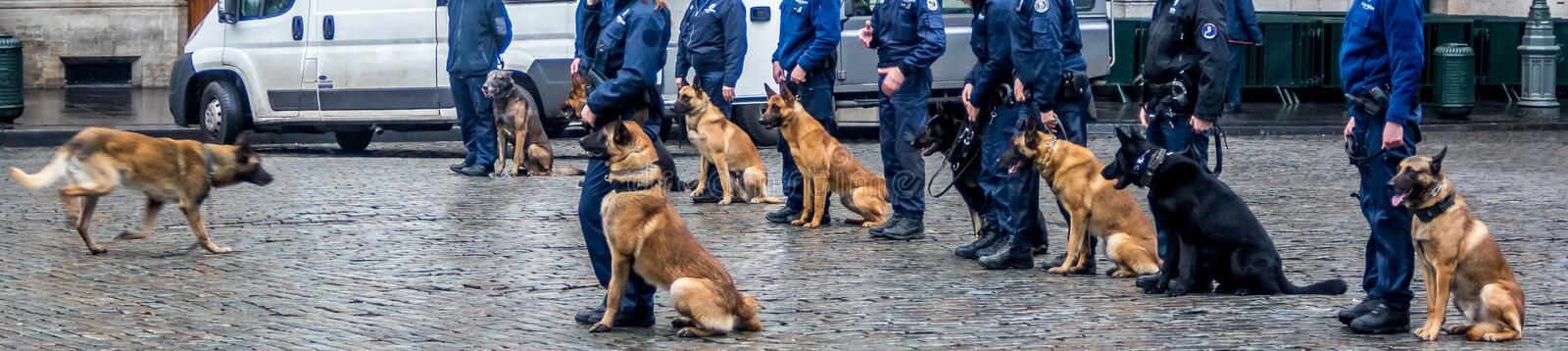 Dog lecture, training. Show and tell. Brussels guards. royalty free stock photo