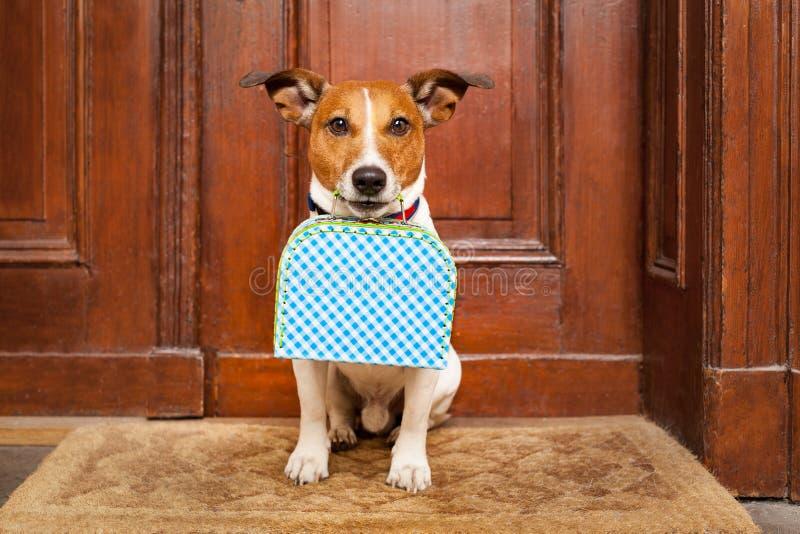 Dog left alone stock photo