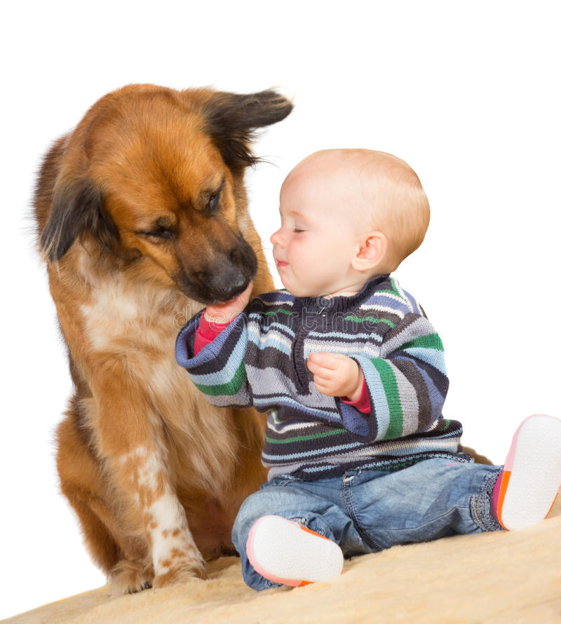 Dog licking a cute baby royalty free stock image