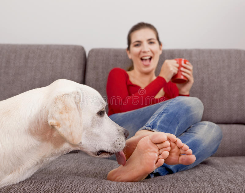 Download Dog licking the toes stock image. Image of pedigree, beauty - 27690965