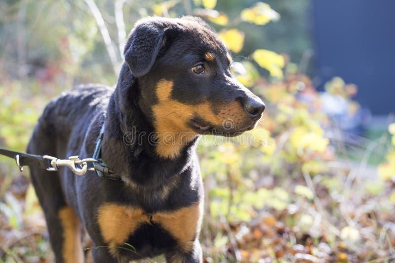 Dog, Dog Like Mammal, Dog Breed, Mammal