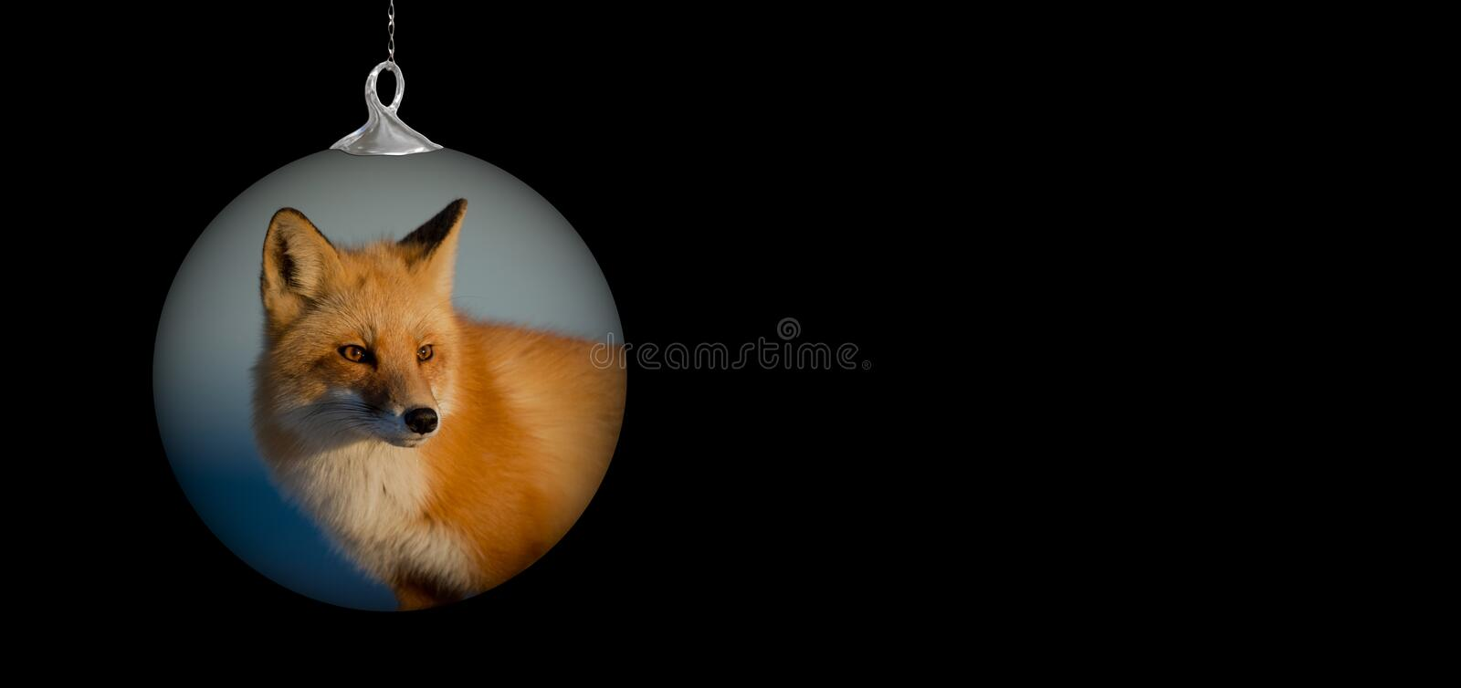 Dog Like Mammal, Mammal, Red Fox, Fox stock photo