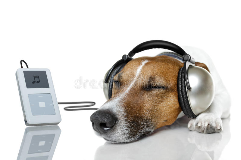 Dog listen to music. With a music player