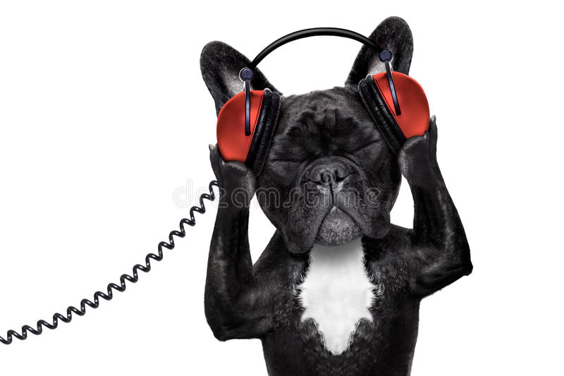 Dog listening music. French bulldog dog listening to oldies with headphones or earphones from a retro recorder, relaxing with eyes closed, isolated on white stock images