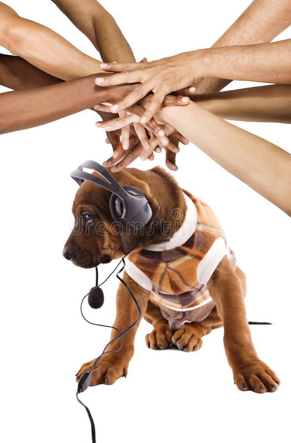 Download Dog listening to music stock photo. Image of head, single - 5617992
